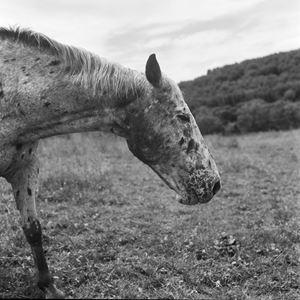 Cisco (Landscape) by Moyra Davey contemporary artwork photography