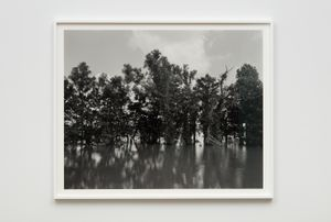 Mississippi River and Trees by Dawoud Bey contemporary artwork photography
