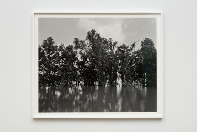Mississippi River and Trees by Dawoud Bey contemporary artwork