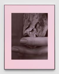 Pacific Driftwood (Pink Lilac Filter) by Josephine Pryde contemporary artwork print