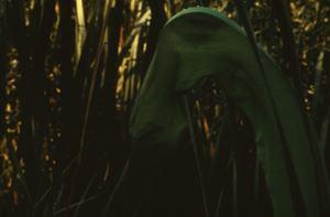 """Ursprung der Nacht"" (Amazonas Kosmos) / ""Origin of the Night"" (Amazon Cosmos) by Lothar Baumgarten contemporary artwork"