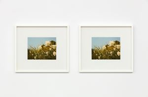 Flowers 1, Flowers 2 by Andrew Grassie contemporary artwork