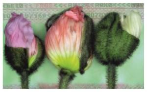 Dein Eros Mein Mohn (Your Eros My Poppy) by Hans-Joachim Ellerbrock contemporary artwork