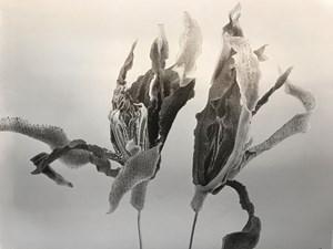 Gardenia-Forever by Chu Chu contemporary artwork