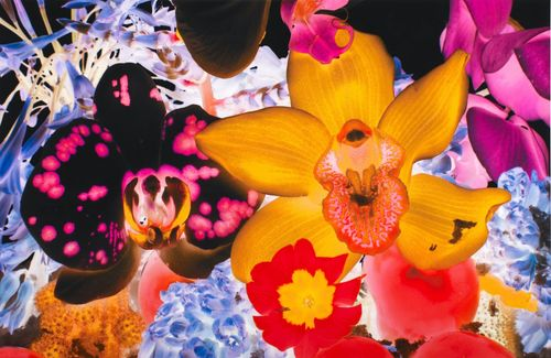 At the Far Edges of the Universe #5 by Marc Quinn contemporary artwork print