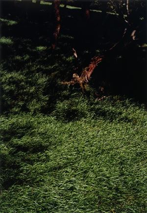Grove by Samuel Laurence Cunnane contemporary artwork