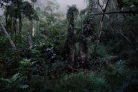 The Garden Series No.6 by Erica Lai contemporary artwork photography