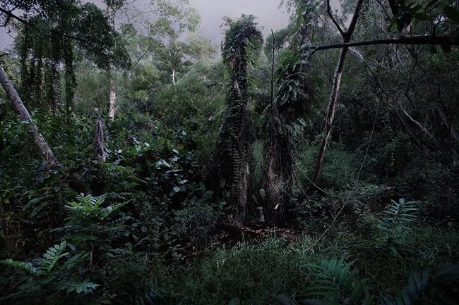 The Garden Series No.6 by Erica Lai contemporary artwork