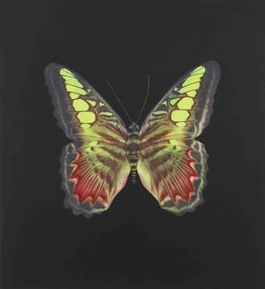 The Souls on Jacob's Ladder No. 2 by Damien Hirst contemporary artwork