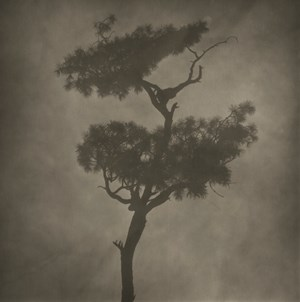 Fog-Branch No.2 by Lu Yanpeng contemporary artwork