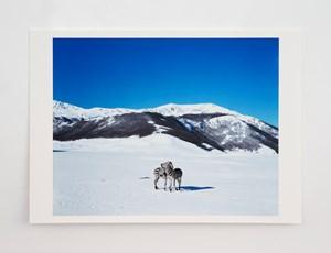 Untitled (zebras) * by Paola Pivi contemporary artwork