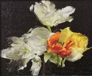 (AJAM-EDI-088) by Alexander James Hamilton contemporary artwork
