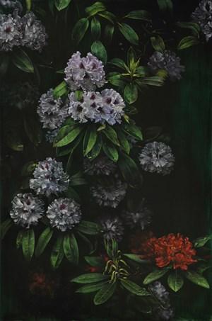 Rhododrendron by Helena Parada Kim contemporary artwork