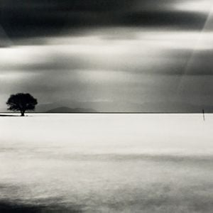 Biwa Lake Tree Study 5 by Michael Kenna contemporary artwork