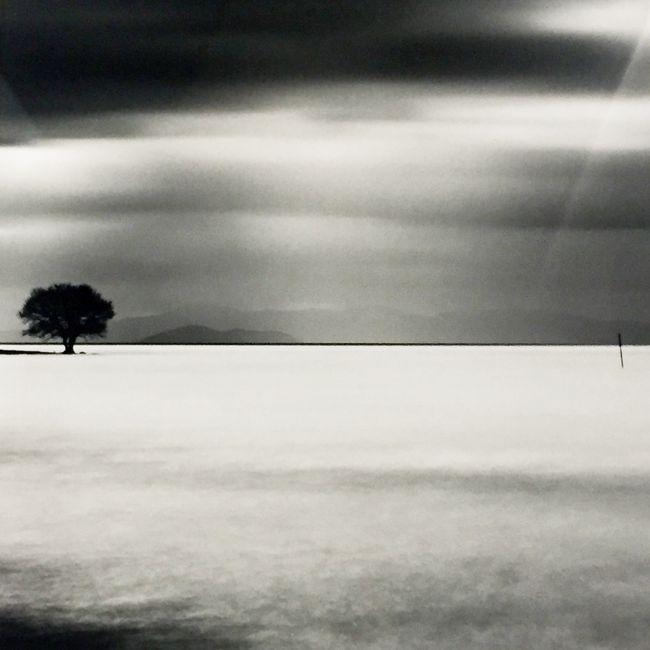Biwa Lake Tree Study 5 by Michael Kenna contemporary artwork