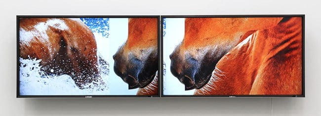 The Feral Horses of Natasha von Braun / Two Files for Two Monitors by Nathan Pohio contemporary artwork