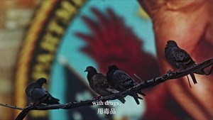 The Homing Pigeon by Cheng Ran contemporary artwork moving image