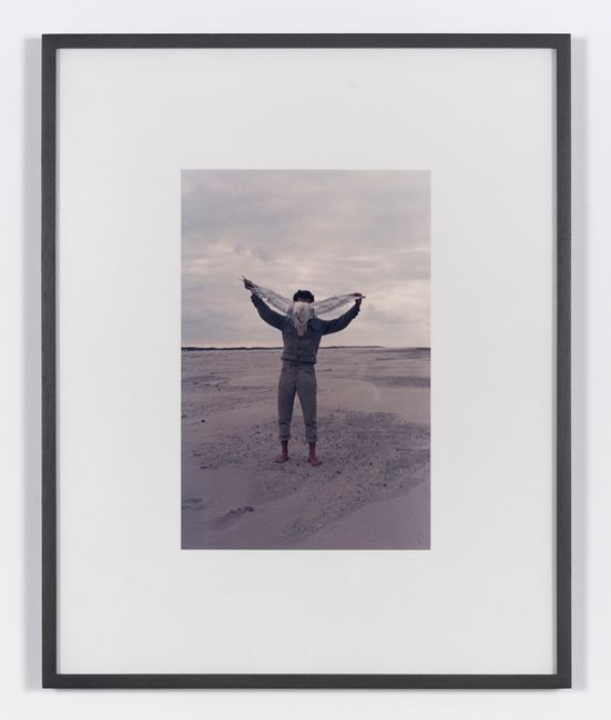 Albatros by Lothar Baumgarten contemporary artwork