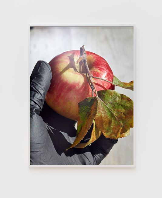 Apple and Black Glove by Roe Ethridge contemporary artwork