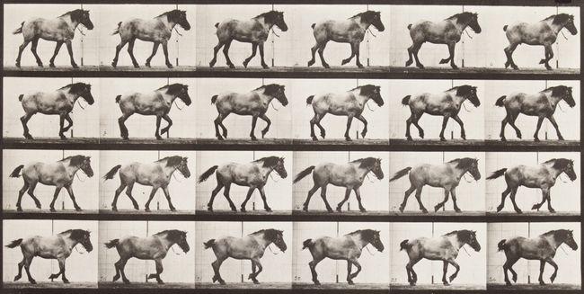 'Hansel' walking, free. by Eadweard Muybridge contemporary artwork