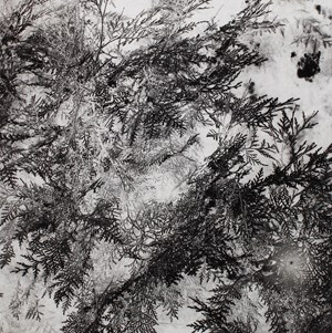 Pine by Xiaoyi Chen contemporary artwork