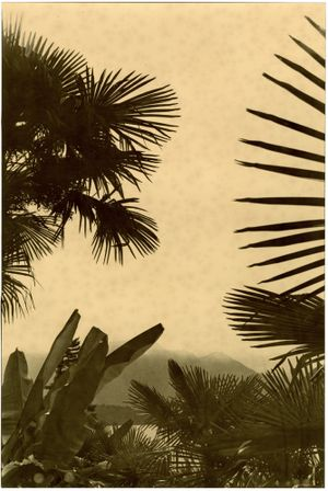 Put Como On The Cover (Paradise) by Bruno V. Roels contemporary artwork