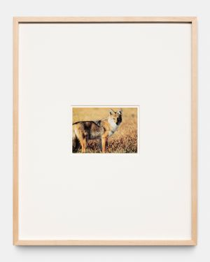 Coyote Postcard Collage: 1-16 by Sherrie Levine contemporary artwork
