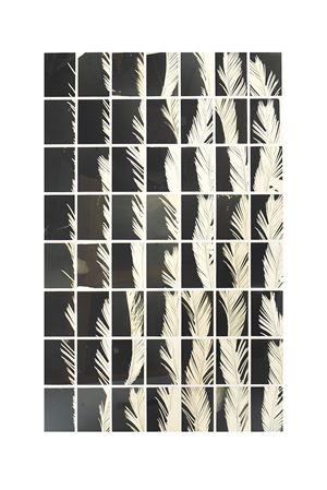A Palm Tree Is A Palm Tree Is A Palm Tree (Palmographs #1) by Bruno V. Roels contemporary artwork