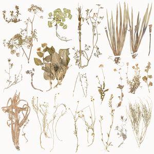 The Extinct Flora in Spain by Juan Zamora contemporary artwork
