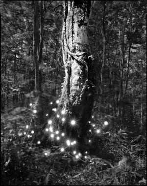Photo-Respiration Trees Hakkoda #2 by Tokihiro Sato contemporary artwork