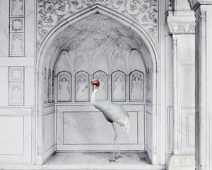Homage to Ustad Mansur, Red Fort, Agra by Karen Knorr contemporary artwork