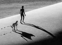 On The Catwalk by David Yarrow contemporary artwork photography