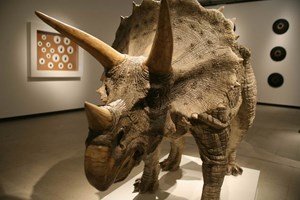 Triceratops by Sun Yuan + Peng Yu contemporary artwork