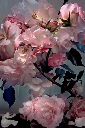 Rose by Nick Knight contemporary artwork