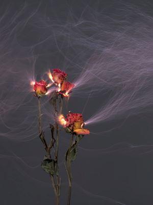 Rustling 6 by Hu Weiyi contemporary artwork