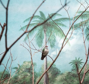 Wompoo fruit dove and palm trees by Eric Pillot contemporary artwork