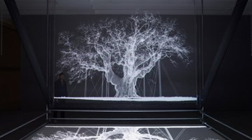 Contemporary art exhibition, Mat Collishaw, Albion at Gary Tatintsian Gallery, Moscow