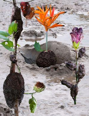 Espécimen Raro # 5 by Julian Chams contemporary artwork