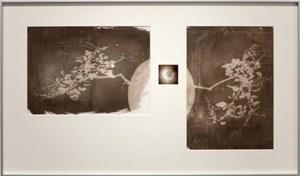 Houseplant and sun quotation 10 by Neha Choksi contemporary artwork