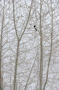 Mr. Magpie by Michel Zoghzoghi contemporary artwork photography