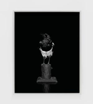 Magpie (Camera) (I) by Sarah Jones contemporary artwork photography