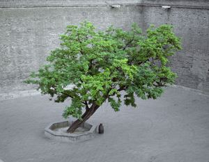 Tree by Shen Wei contemporary artwork photography