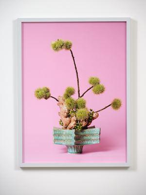 The Floozy, Ginger (Zingiber sp.) by Ann Shelton contemporary artwork