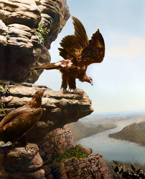 Wedge Tail Eagle, Mt Bell eld in Serra Valley, The Grampians, Victoria by Anne Zahalka contemporary artwork