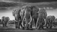 The Mob by David Yarrow contemporary artwork photography