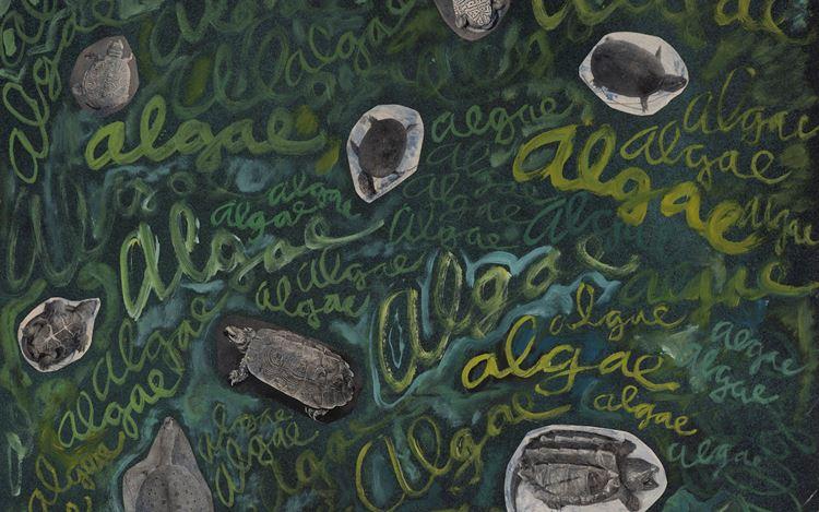 Robert Smithson, Algae, algae (ca. 1961–1963) (detail). Paint and photo collage on Masonite. 59.3 x 69.1 x 0.6 cm. ©Holt/Smithson Foundation, Licensed by VAGA at ARS, New York. Courtesy Marian Goodman Gallery.