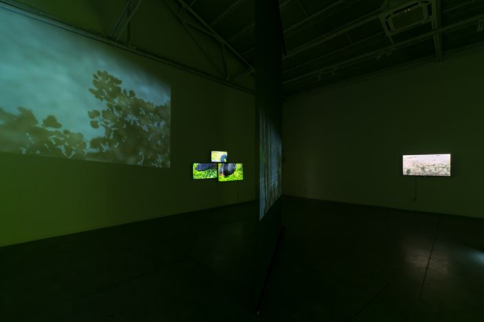 Exhibition view: Liang Yue, Mind Rehearsal, ShanghART, Shanghai (7 September–7 October 2019). Courtesy ShanghART. Photo: Alessandro Wang.