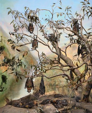 Fruit Bat, Nepean River, Sydney Region of New South Wales by Anne Zahalka contemporary artwork