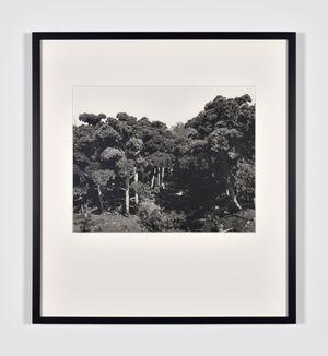 Urwald by Lothar Baumgarten contemporary artwork photography