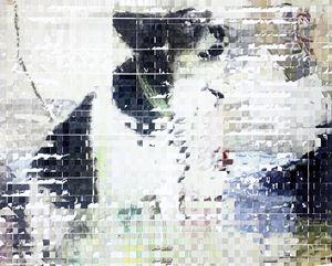 dog by Shiori Tono contemporary artwork